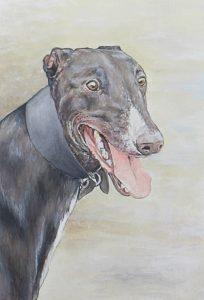 greyhound, dog, pet portrait, art