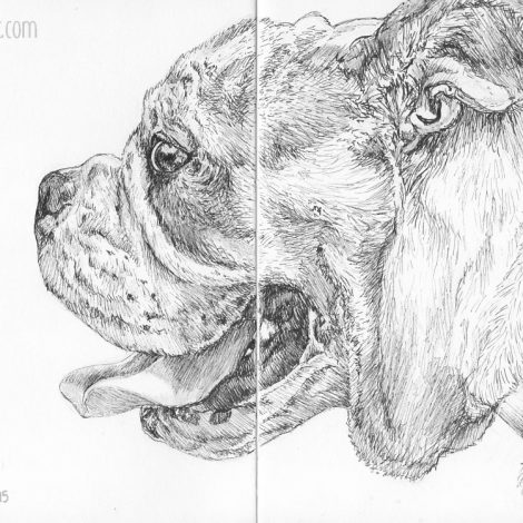 art, pet portrait, bulldog, dog, inktober