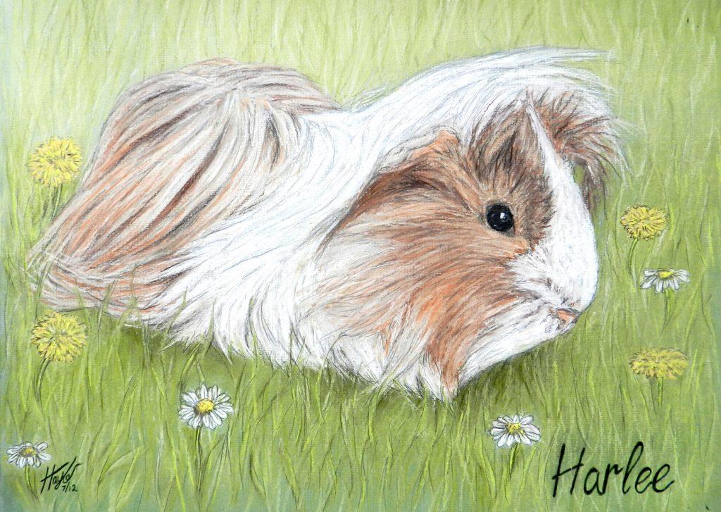 pet portrait animal artwork