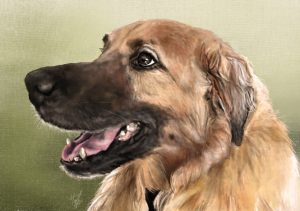 pet portrait animal artwork