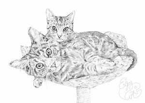 cat, art, kitten, cute, portrait, commission, pencil, drawing, pet