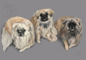 dogs, tibetan spaniel, spaniel, art, digital art, portrait, pet portrait, commission, artwork, group portrait