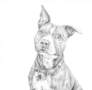 dog, staffie, boxer, pet, portrait, art, drawing, gift, bespoke