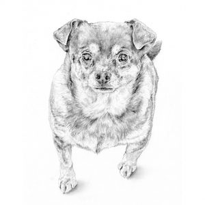 pencil drawing dog portrait commission