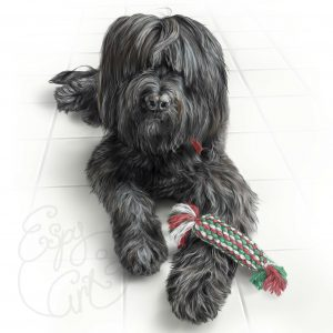 pet portrait briard dog art