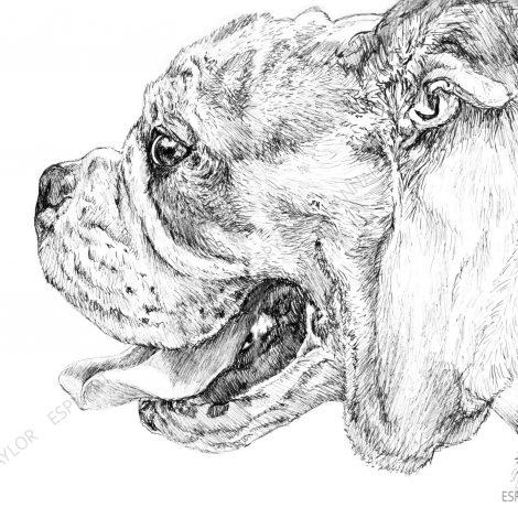 bull dog tongue